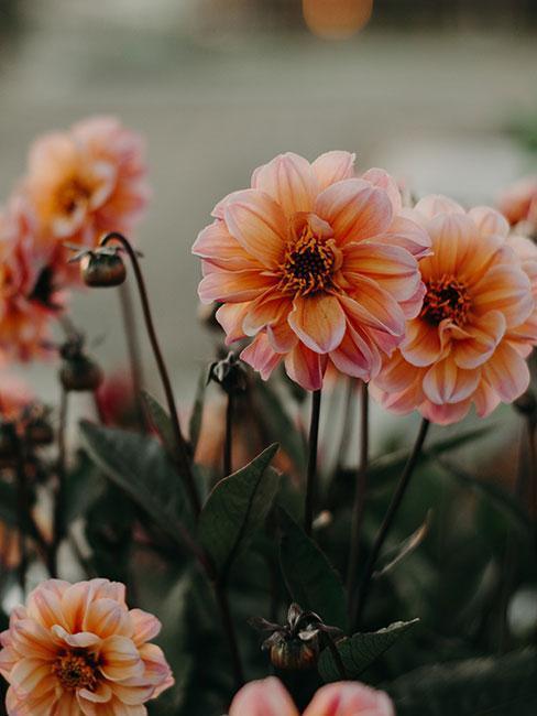 Květiny-na-balkoně-44
