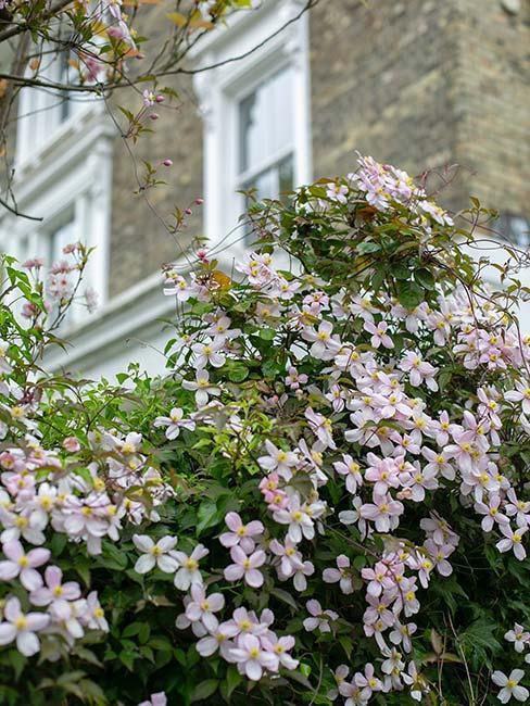 Květiny-na-balkoně-2