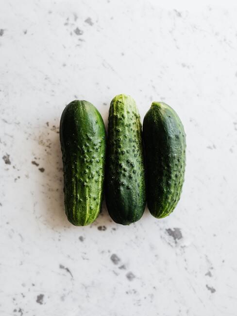 jak pěstovat okurky (8)