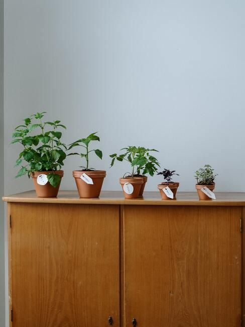 Jak pěstovat rajčata