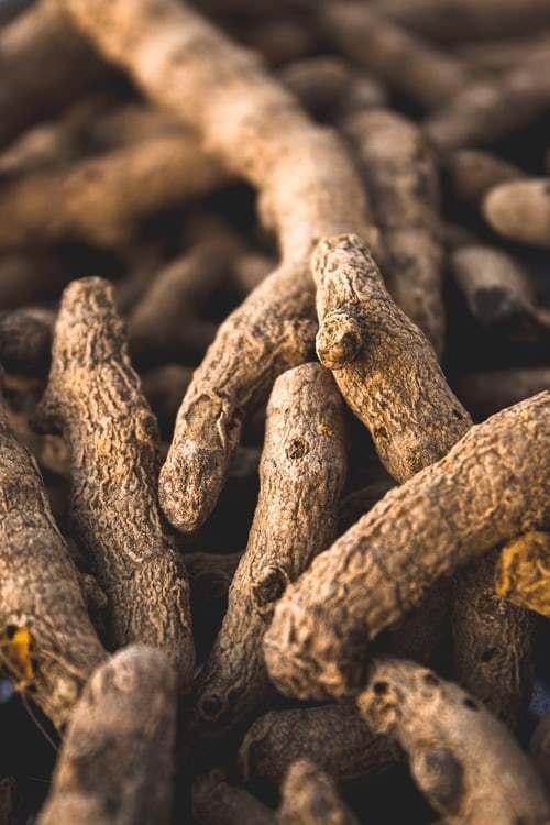 Jak-pěstovat-zázvor-3