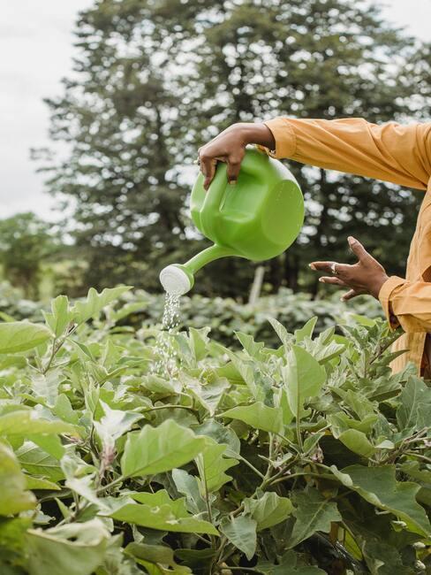 Pěstování-okurek-inspirace