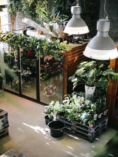 domácí skleník