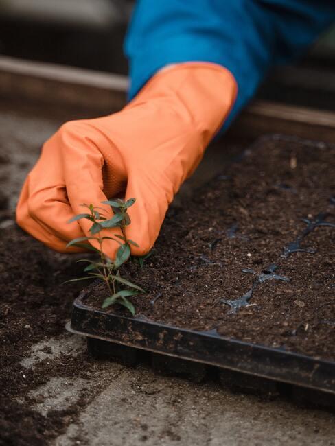 zelenina ve skleníku 3