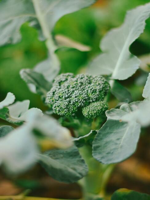 Co pěstovat ve skleníku 08
