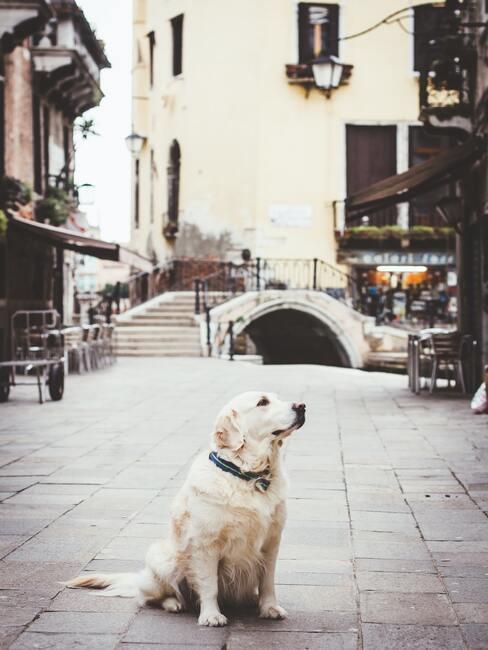 kam na dovolenou se psem