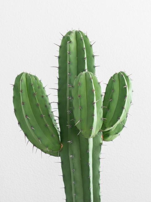 vases cactus sur une table dressée