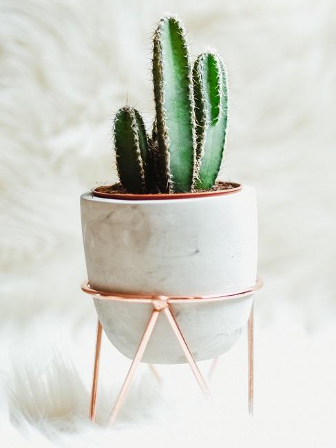 Kaktus in einem schönen Übertopf mit Metallgestell auf hellem Kunstfell