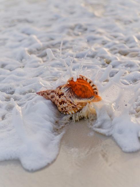Eine Muschel am Strand wird von einer Welle überspült.
