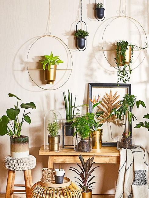 Wand mit sehr vielen Pflanzen in hängenden Töpfen, auf einem Holztisch und auf einem Hocker, darum Deko