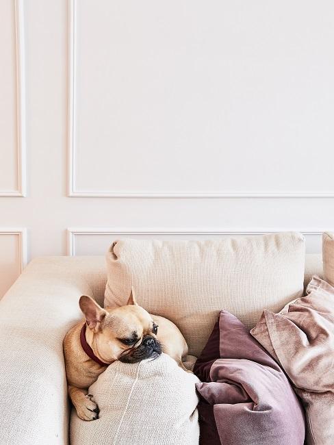Hund sitzt auf der Couch.