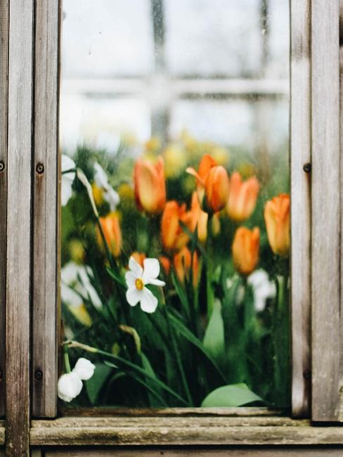 Fenster von außen, durch das innen reichlich bunte Blumen als Dekoration zu sehen sind