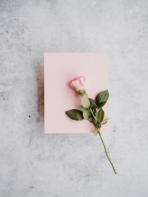 Valentinstag Sprüche Rose auf rosafarbenem Papier