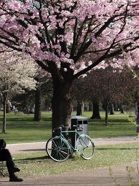 Blaues Fahrrad an blühendem Baum