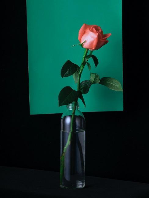 Rose in Glas