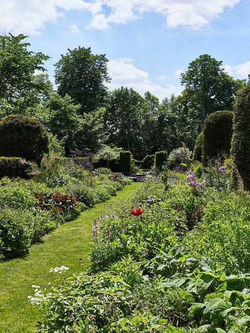 Moderner Garten Wiese Rasen Blumen Weg