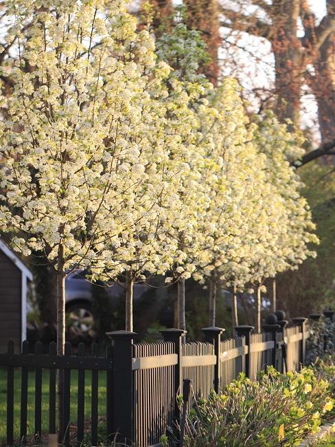 Sichtschutz Garten Zaun Pflanzen Blumen Holz