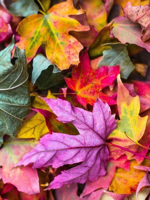 buntes Herbstlaub als Material für Herbstdeko für draußen