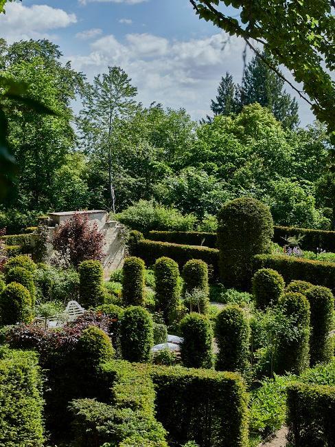 Garten mit grünen Bäumen