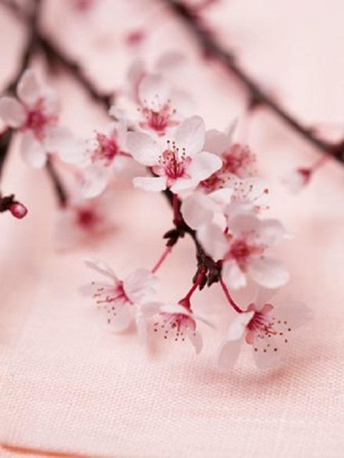 Dekozweig Kirschblütenzweige Rosa