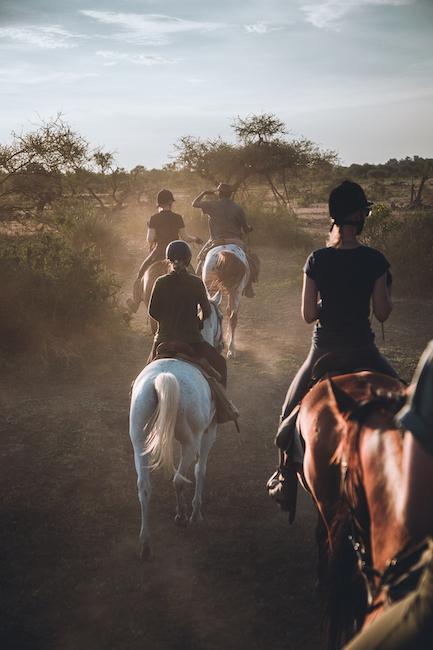 Reitsafari mit vielen Pferden