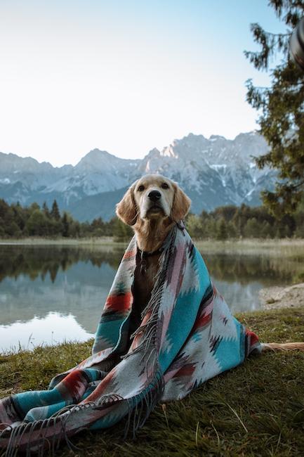 Hund in Tuch eingewickelt am Wasser