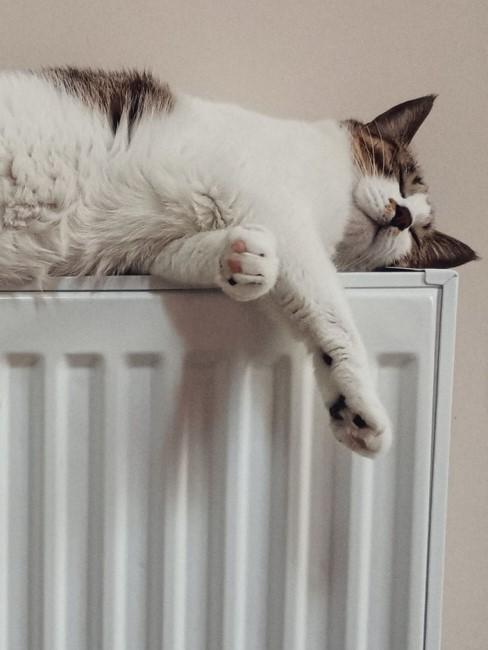 Katze liegt auf einer Heizung
