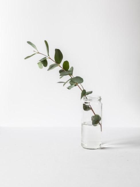 Pflanze in Wasserglas Bad putzen