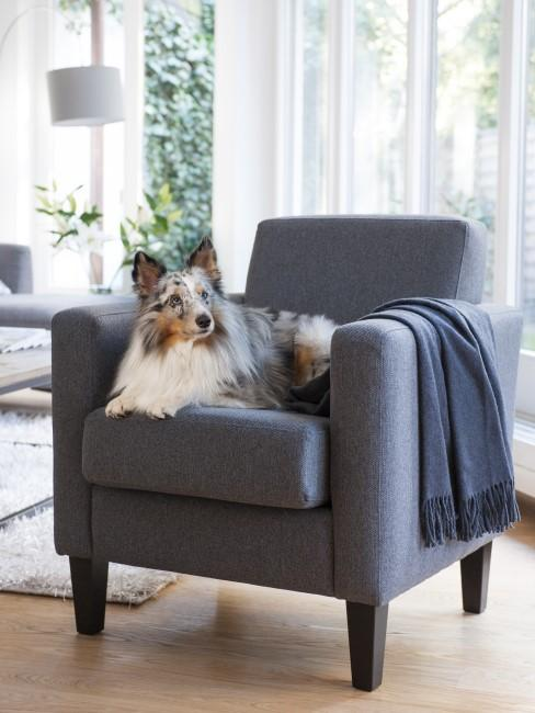 Hund liegt auf grauem Sessel