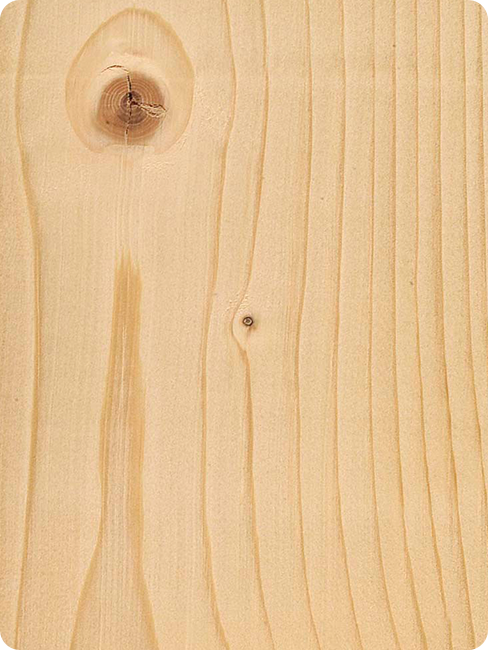 Holzarten Fichte