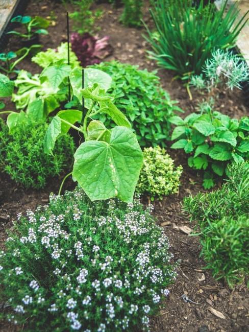 Beet mit grünen Pflanzen