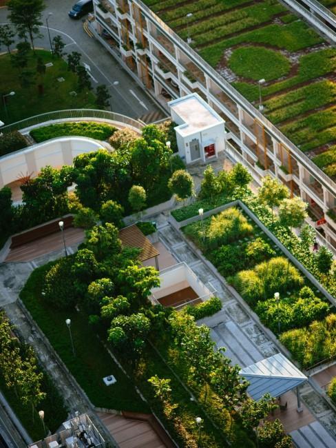 Urban Farming auf Dächern der Stadt