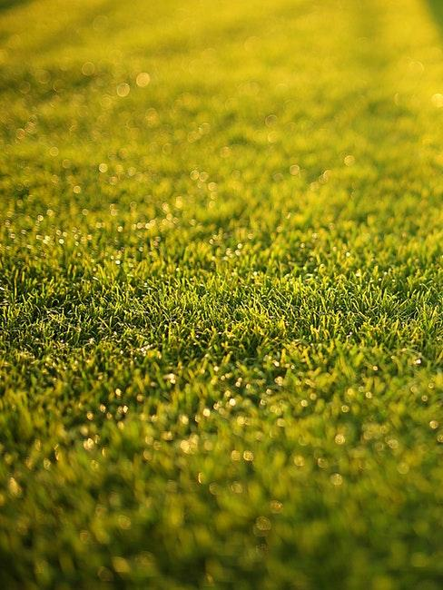 Gesunder grüner Rasen nach dem Vertikutieren