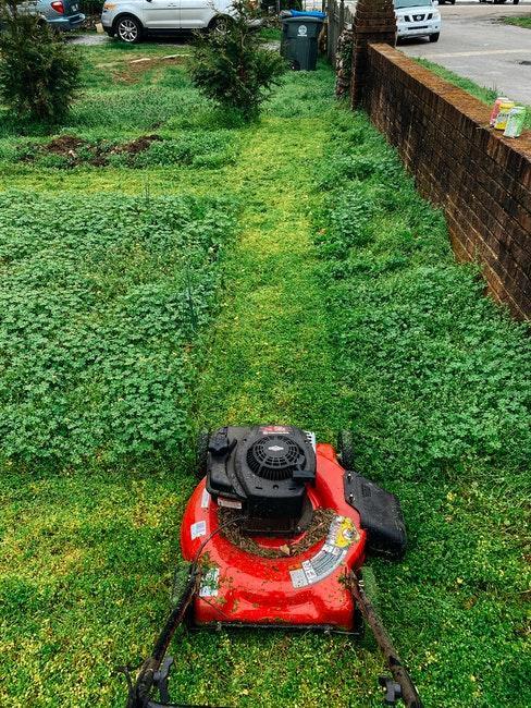 Vor dem Vertikutieren wird der Rasen gemäht