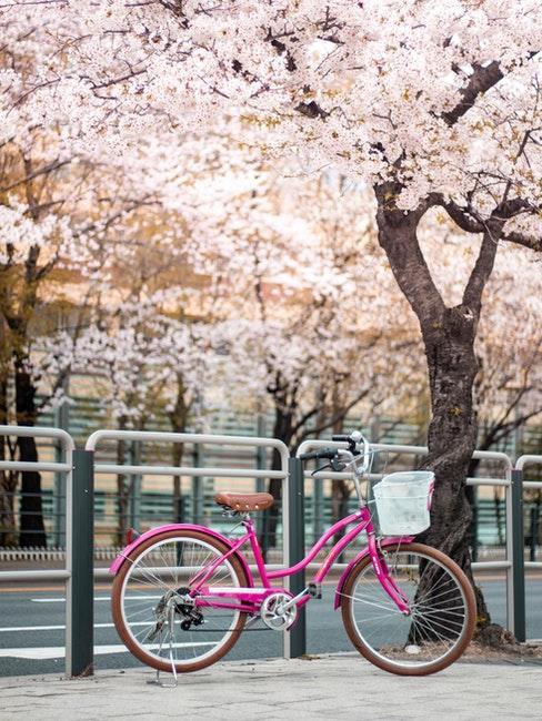 Pinkes Fahrrad unter einem frühlingshaften blühenden Kirschbaum