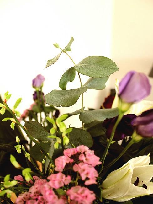 Eukalyptus Zweig mit Blumen