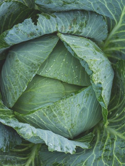Gemüse auch als Anfänger im eigenen Garten pflanzen und ernten