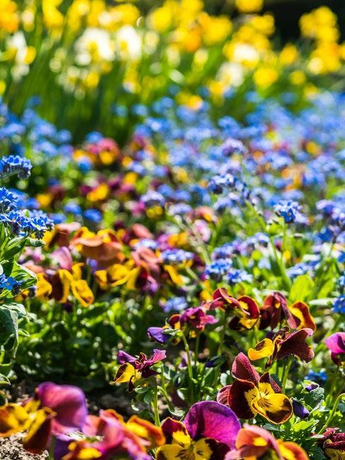 Ziergarten mit vielen bunten Blumen beim Gärtnern für Anfänger