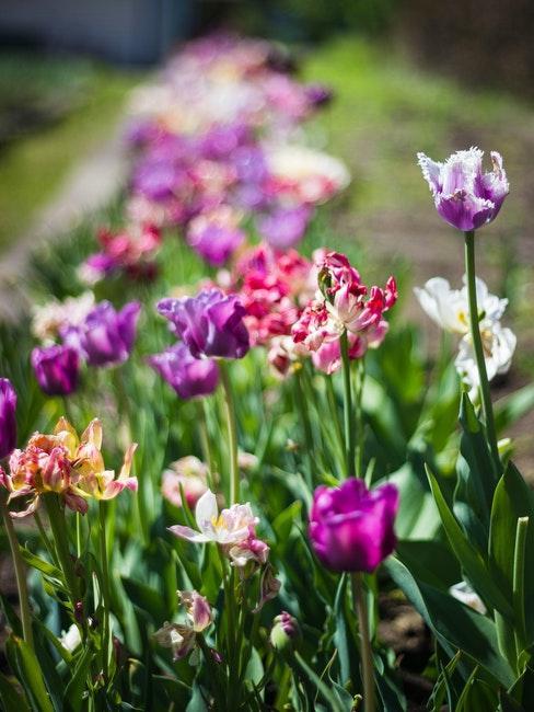 Bunte Blumen im Blumenbeet im Garten