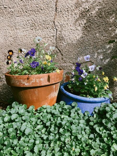 Blumentöpfe stehen vor einer Hauswand