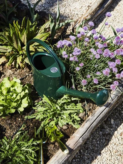 Eine Gießkanne steht im Gemüsebeet
