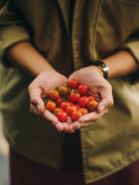 Selbstgepflanzte Tomaten