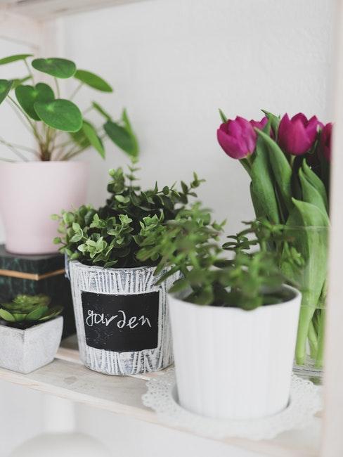 Blumentöpfe bemalen mit Tafellack