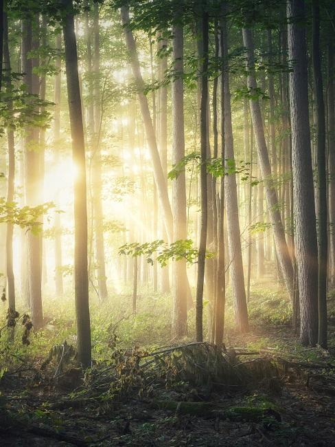 Waldbaden Wald Bäume Licht