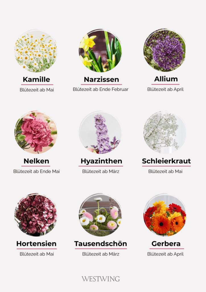 Frühlingsblumen Guide