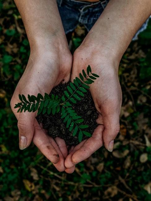 Nachhaltige Unternehmen Pflanzen Erde