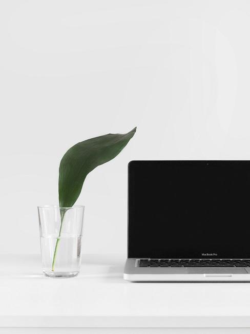 Nachhaltige Unternehmen Laptop Pflanze