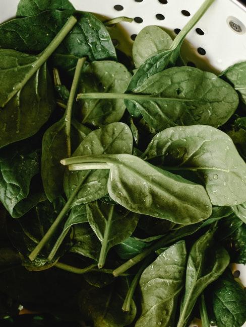 Spinat lässt sich auch im Winter anbauen und ernten