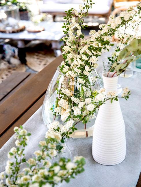 Grüne Pflanze in Vase