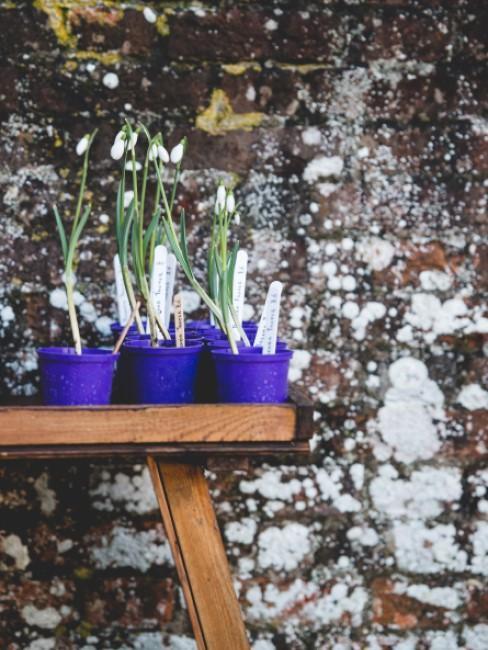 blühende Schneeglöckchen in Töpfen auf Gartenbank